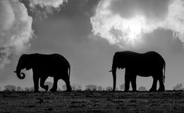 Tvilling- elefanter arkivfoton