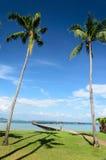 Tvilling- kokosnöttree arkivbilder