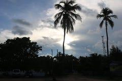 Tvilling- kokospalmer Royaltyfria Bilder