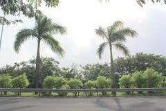 Tvilling- träd Arkivbild