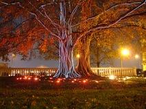 tvilling- tree Royaltyfri Bild