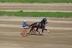 Tävlings- häst i rörelse Royaltyfria Foton