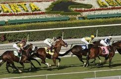 tävlings- santa anita för härlig hästkapplöpning spår Arkivbild