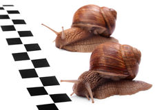 tävlings- snails Arkivfoton