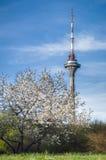 TVtorn av den Tallinn staden, Estland Royaltyfria Bilder