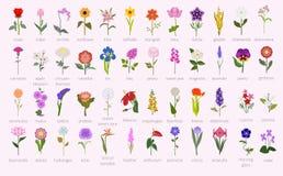 Twój ogrodowy przewdonik Wierzchołka 50 popularni kwiaty infographic royalty ilustracja
