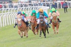 Twarda rasa między koników biegowymi koniami Fotografia Royalty Free