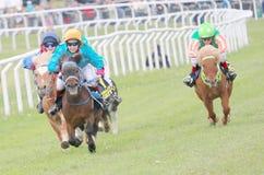 Twarda rasa między koników biegowymi koniami Obrazy Royalty Free