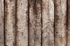 twarde drzewo Obrazy Stock