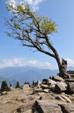 Twardy drzewo na skale fotografia stock