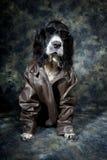 Twardy pies zdjęcie royalty free