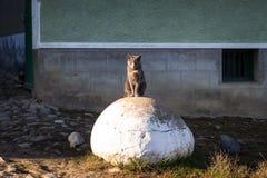Twardy przyglądający kot siedzi na skale obrazy royalty free