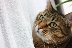 twarz jest cat Obrazy Royalty Free