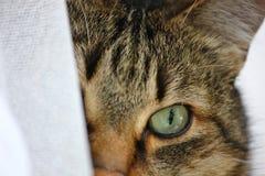 twarz jest cat Zdjęcie Royalty Free