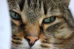 twarz jest cat Zdjęcia Stock