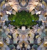 Twarz las - twarz od mech z lali ` s ono przygląda się Zdjęcia Stock