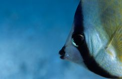 twarz ryb Zdjęcia Stock
