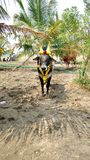 Twarz Tamilski rolnika bóg obraz royalty free