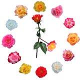 twarz zegara zrobił róże obrazy royalty free