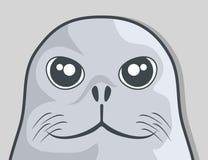 Twarzy foka Zdjęcie Royalty Free
