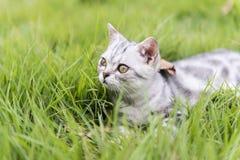 twarzy ostrości przodu trawy kiciuni noga Obrazy Stock