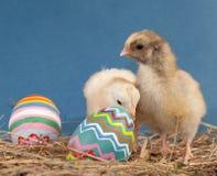 Twee aanbiddelijke kuikens van Pasen in hooi Royalty-vrije Stock Afbeeldingen