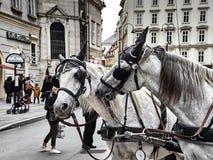 Twee aardige paarden van vervoer het spelen samen in Stephansplatz stock foto