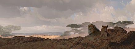 Twee Afrikaanse Leeuwen Royalty-vrije Stock Afbeeldingen
