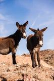 Twee Amigo's Stock Afbeeldingen