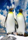 Twee antarctische pinguïnen Stock Afbeelding