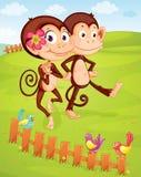Twee apen stock illustratie