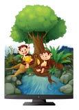 Twee apen die banaan eten door de rivier Stock Foto