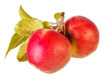 Twee appelen met bladeren Stock Foto's