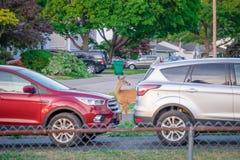 Twee auto's en een jong hert Herten die op de straat lopen Rochester, de V.S. stock afbeelding
