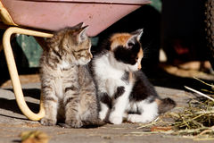 Twee babykatten, leuk katje Royalty-vrije Stock Fotografie