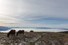 Twee backlit paarden, die gras, bovenop een berg, met som eten Royalty-vrije Stock Foto's