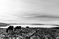 Twee backlit paarden, die gras, bovenop een berg, met som eten Royalty-vrije Stock Foto
