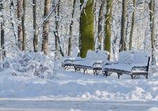 Twee banken tegen de achtergrond van bomen in de sneeuw Stock Foto's