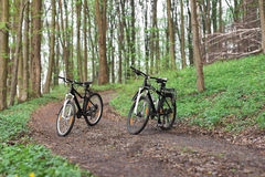 Twee bergfietsen in het bos Stock Afbeeldingen