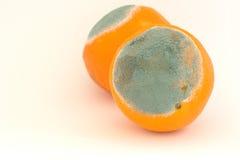 Twee beschimmelde sinaasappelen Royalty-vrije Stock Fotografie