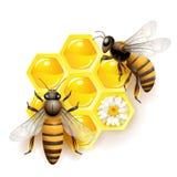 Twee bijen Royalty-vrije Stock Foto's