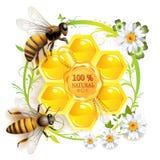 Twee bijen en honingraten Stock Afbeelding