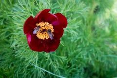 Twee bijen op het werk Royalty-vrije Stock Foto