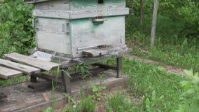 Twee bijenkorven bij het plattelandshuisje in Rusland stock videobeelden