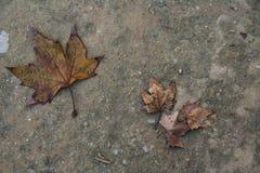 Twee bladeren in het bos stock afbeelding