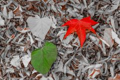 Twee bladeren van rood, en groen op een tapijt van droge bladeren Royalty-vrije Stock Afbeeldingen