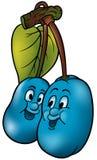 Twee Blauwe Pruimen Royalty-vrije Stock Afbeeldingen