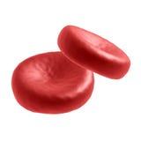 Twee bloedcellen die op wit worden geïsoleerdc Royalty-vrije Stock Fotografie