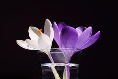 Twee bloemen stock afbeelding