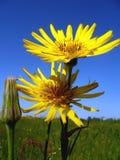 Twee bloemen royalty-vrije stock afbeeldingen